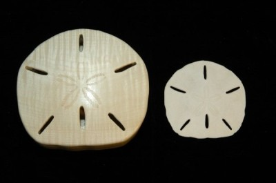 In The Deatails Gallery Sand Dollar Image